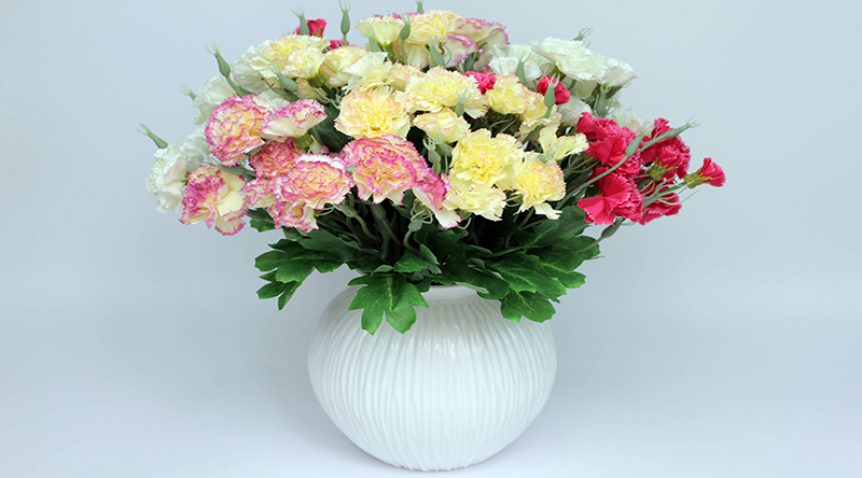 Cách trồng hoa Cẩm chướng đơn giản