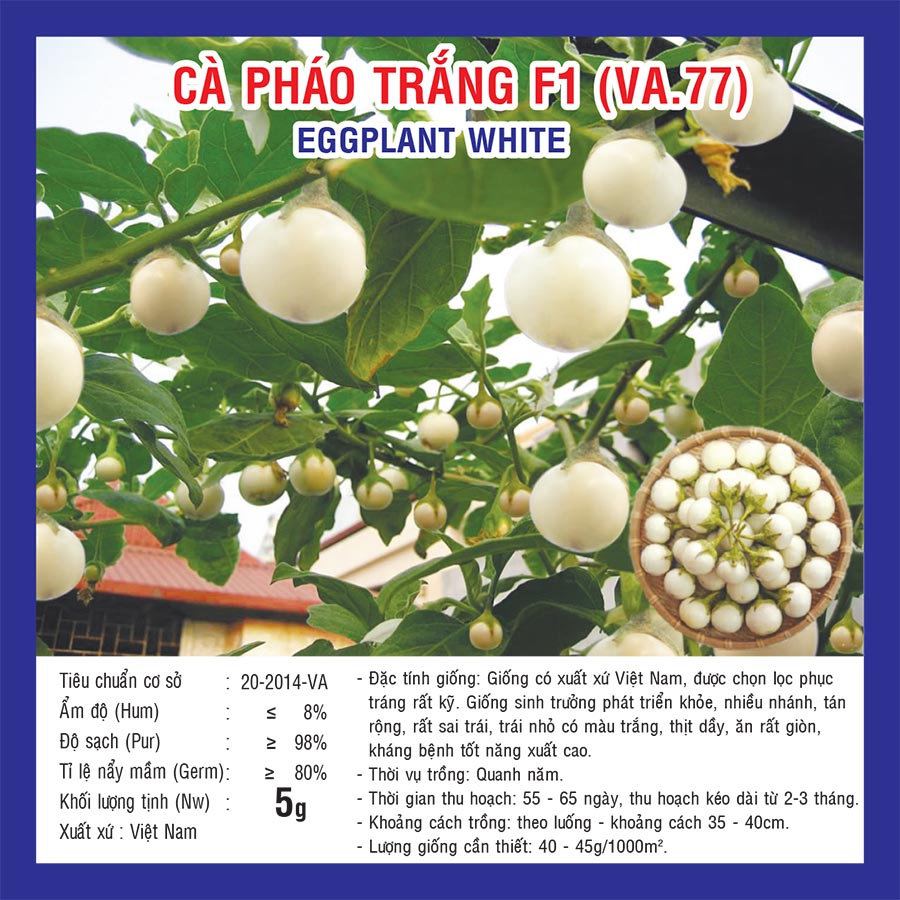 White Egg Plant Ca Phao Trang Seed 2 Package